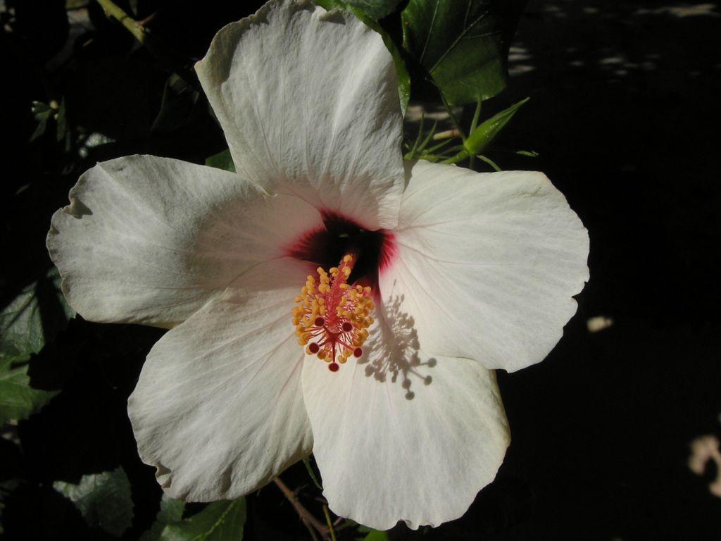 bloemen stratawandelreizen